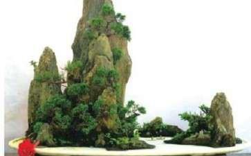 海派山水盆景怎么构思立意的方法
