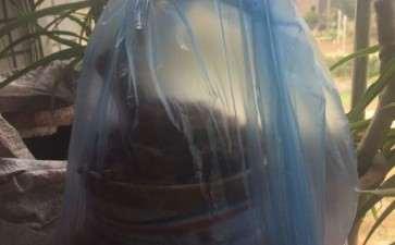 套袋野山楂下山桩 好像要发芽了 图片
