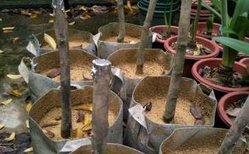 茶花下山桩能下施用复合肥 图片
