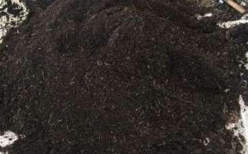 给茶花下山桩怎么换盆土的方法 图片
