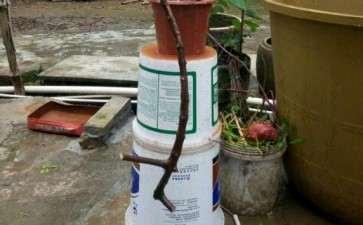 姜太公钓鱼式的茶花下山桩 图片