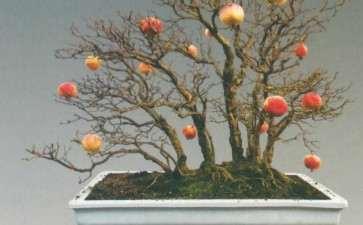 怎么解读石榴盆景《榴林梦意》 图片