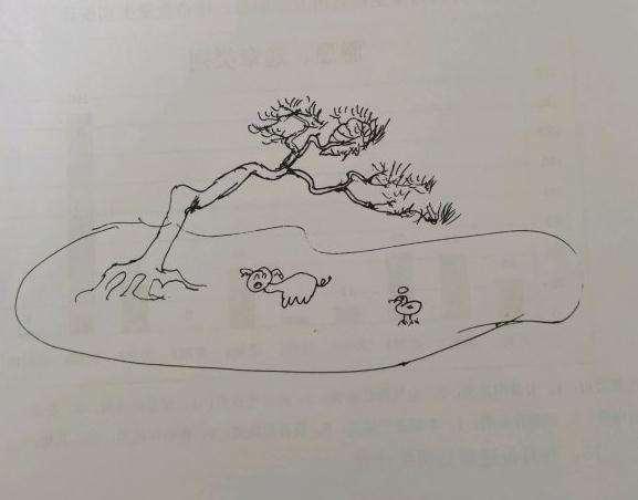 今年年初收的一盆黄山松盆景