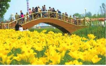 江苏百合文化节从2014年开始举办