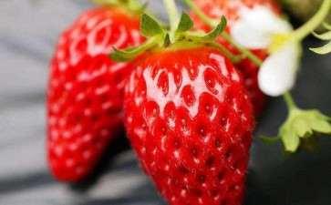 盆栽草莓病虫害怎么防止的2个方法