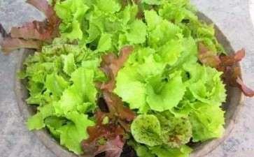 盆栽蔬菜怎么肥水管理的2个方法
