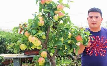 盆栽果树怎么控制旺长与徒长 图片