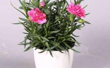 办公区盆栽花卉怎么摆放的2个要求