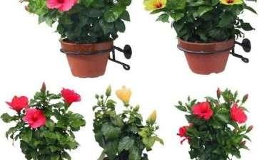 室内盆栽花卉怎么养护管理的4个方法
