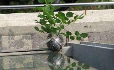 盆栽花卉怎么夏季养护的2个方法