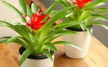 造成盆栽花卉土传病害发生严重的7个因素