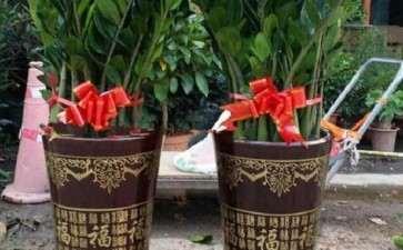 盆栽花卉土传病害怎么防控的6个技术