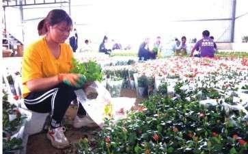 为什么盆栽玫瑰的行情急剧下降