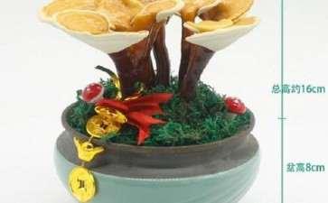 盆栽食用菌在阳台蔬菜中的应用