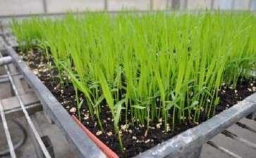 盆栽水稻对土壤汞富集特征及其影响因素