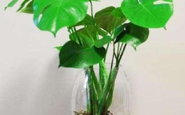 盆栽水生花卉怎么种植养护的3个方法