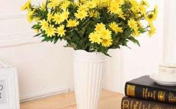 生长调节剂对菊花再生有什么影响