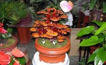 盆栽食用菌园林景观设计的2个原则