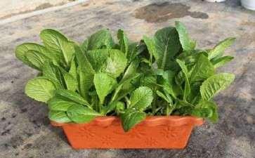 浅析盆栽蔬菜产业的现状与发展