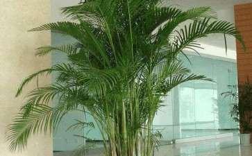 浅析室内盆栽养护的10大准则