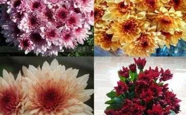 怎么促进青州盆栽花卉产业持续的发展