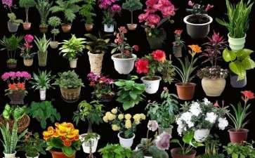 国外盆栽花卉产业的研究综述