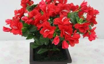 国内盆栽花卉产业的3个研究综述