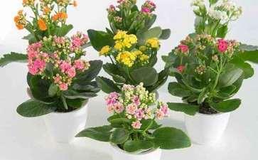 青州市盆栽花卉产业的7大部分