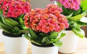 青州花卉产业组织的理论与应用