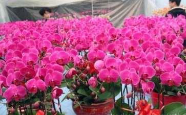 青州市盆栽花卉产业的发展历程