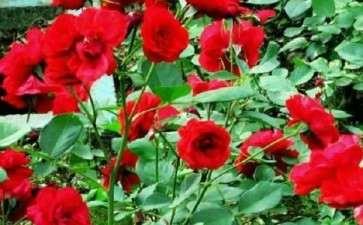 为什么青州花卉物流行业发展迅速