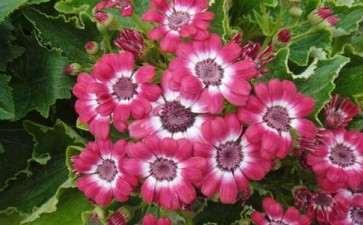 青州市盆栽花卉产业发展的3个威胁