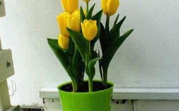 2020年 荷兰花市串起庞大花卉产业链