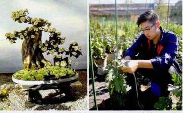 园艺菊花怎么造型的2个方法