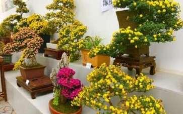 菊花盆栽怎么配制营养土和移栽