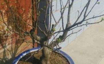 冬红果下山桩在屋发芽了 可以搬到外面去吗
