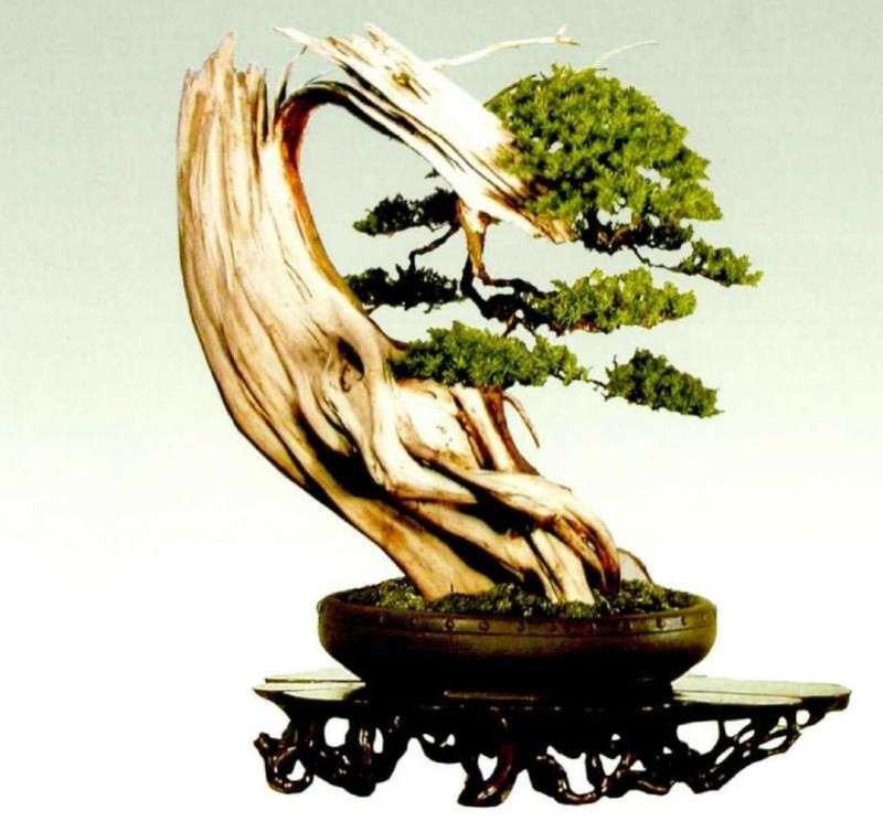 为什么温州是浙江盆景风格的两大中心之一