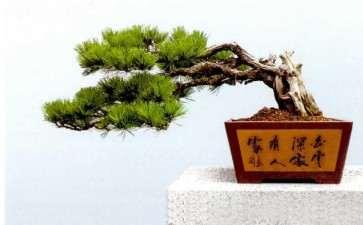 胡乐国盆景创作文化漫谈