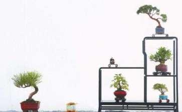 吴鸣的微型盆景园 就位于浙江桐乡乌镇