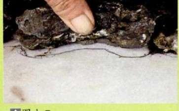 水旱盆景怎么.胶合的3个方法 图片