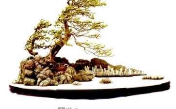 盆景作品怎么制作意境的方法