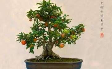盆栽果树怎么春前管理的3个方法