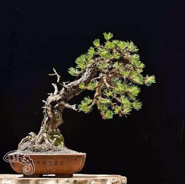 浅谈盆栽与盆景的联系有什么不同