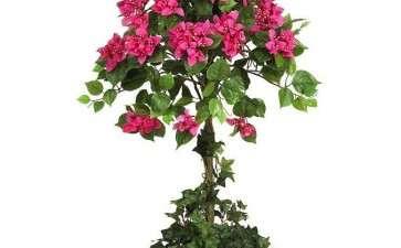 盆栽花卉怎么防红蜘蛛的3个方法