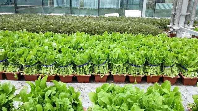 蔬菜怎么无土育苗盆栽的4个技术