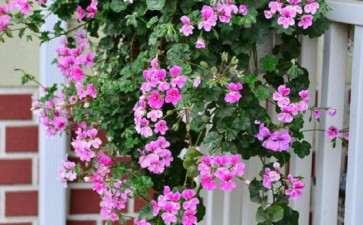 怎么建设温室盆栽花卉地面加热系统
