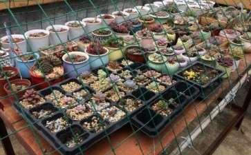 广东春夏天多肉遮阳网用几针的好