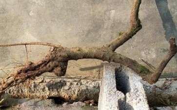 平枝荀子下山桩用腐殖土 可以吗 图片