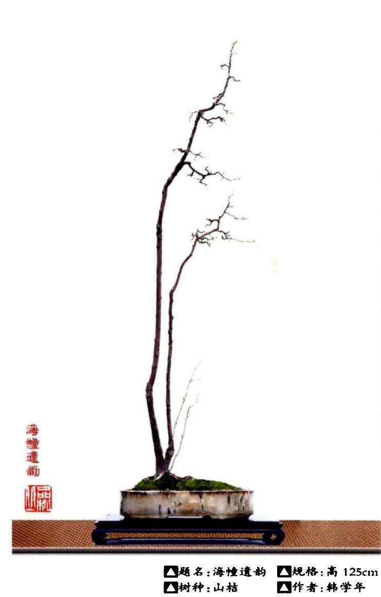 日本文人木盆景和素仁格有什么区别