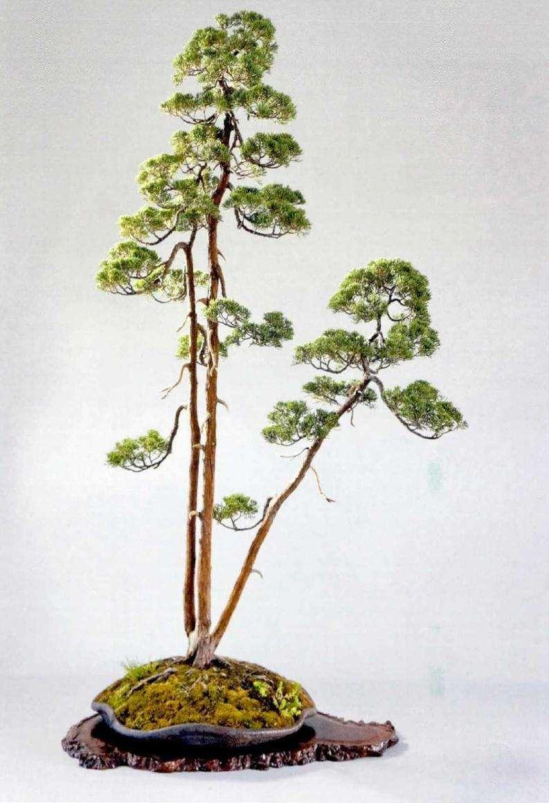 文人树盆景的通俗概念和名称渊源